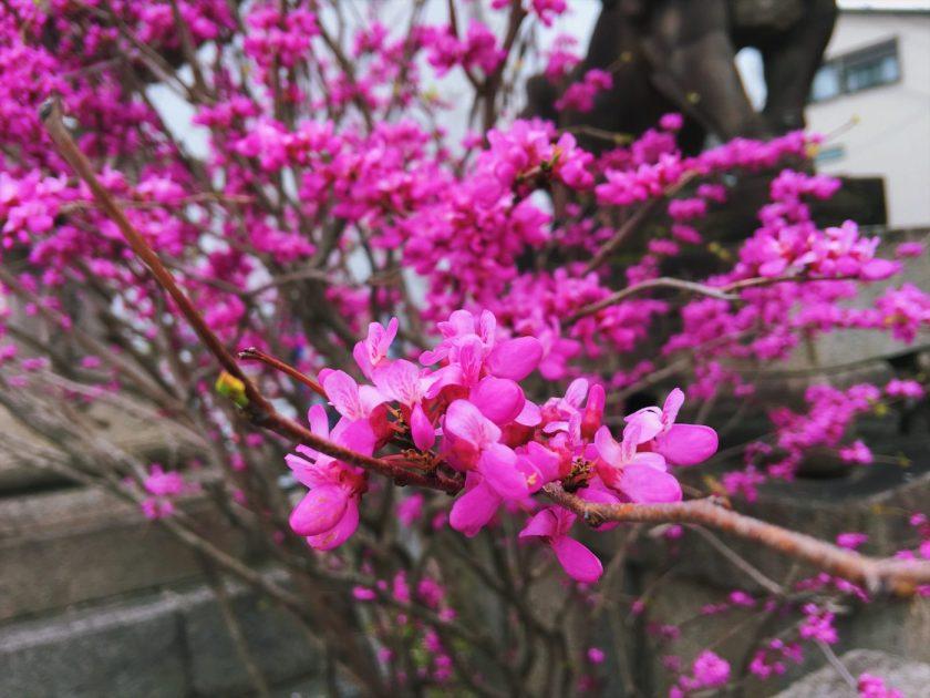 Ume? Flowers