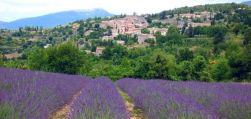 Provence Lavender Season -discover the real provence
