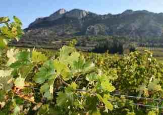 Vallon de Glauges - Les Alpilles - Eyguieres
