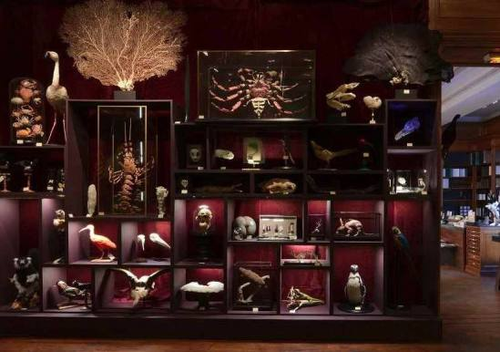 Deyrolle Paris - Cabinet of Curiosities