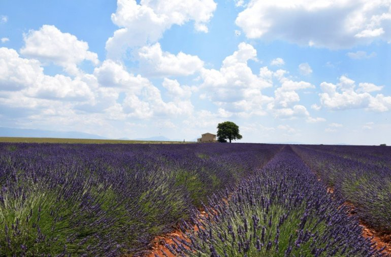 Silent Sunday - Lavender - Provence
