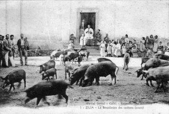 Corsican history - Corsica's Past Struggles - The History of Corsica