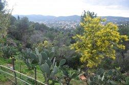 Mimosa Photo Gallery - Cactus