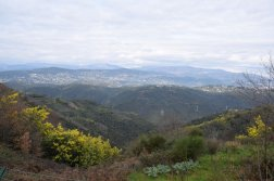 Mimosa Photo Gallery - Viewpoint