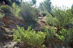 Provence's Blue Coast - correct path hidden in shrubs