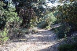 Provence's Côte Bleue - continue as path narrows