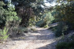 Provence's Côte Bleue - continue as path narrows