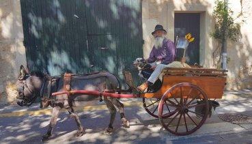 Cart and donkey - Provences Cherry Festival - La Roque d'Anthéron