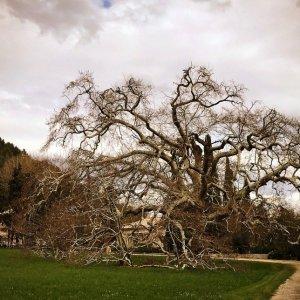 Silent Sunday - Le Geant de Provence
