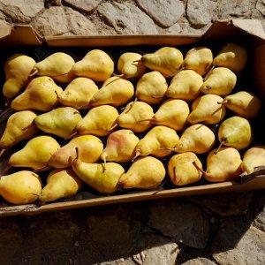 Silent Sunday - Les poires du marché de Sénas - Pears from the farmers market in Sénas