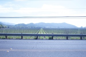 Napa_Vineyard4