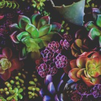 8 Succulent Plant Pets to Adopt