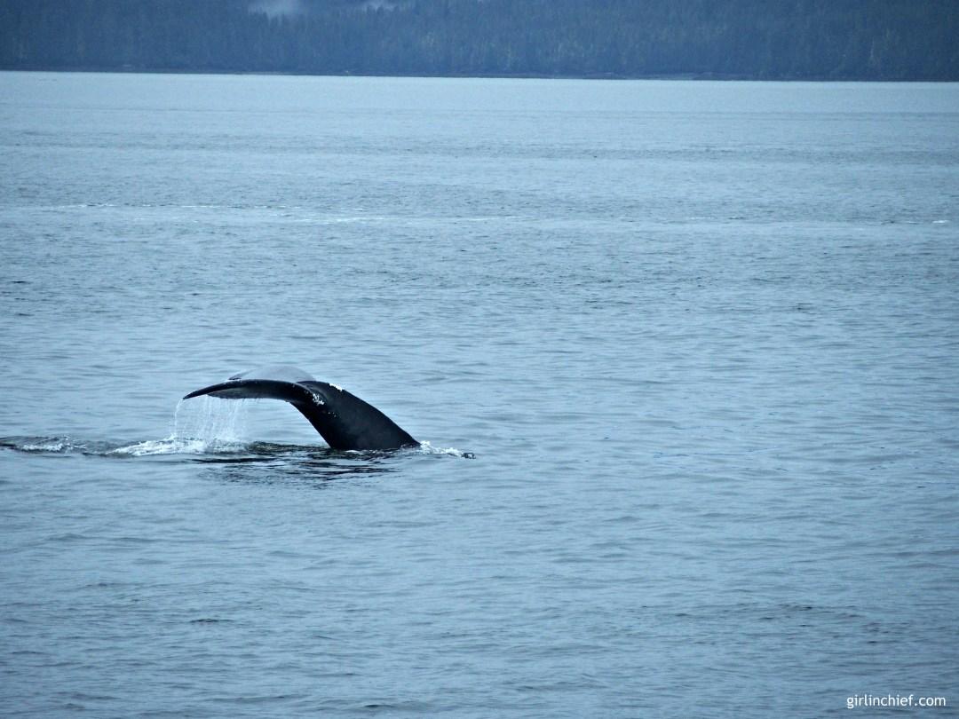 humpback-whale-tail-juneau-alaska