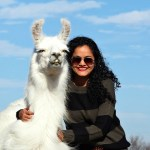 Llama Love: The Llamas Of ShangriLlama