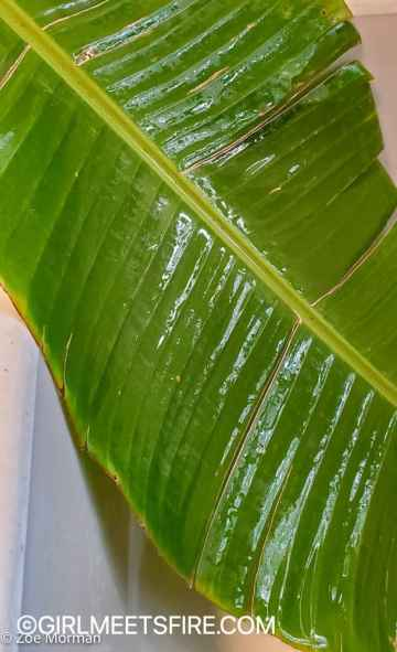 Banana leaves from my garden after being washed