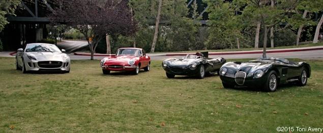 Jaguar lineup 2