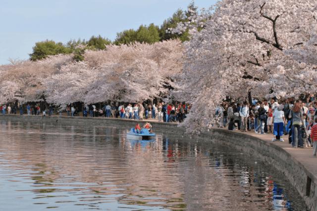 Spring celebration in Washington, D.C