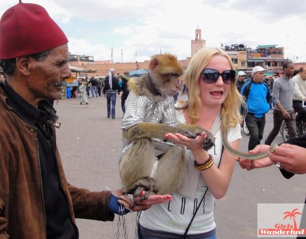 15 Harmful animal tourist attractions to avoid by Girlswanderlust -  Morocco - Monkeys.jpg