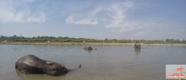 Bathing elephants Chitwan