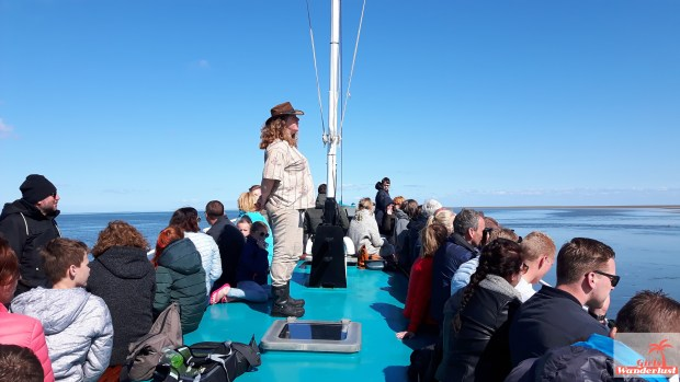 Top 10 things to do in Texel – The Netherlands (including map).seal boat.jpg