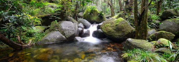 Rock Pool, Daintree Rainforest.jpg