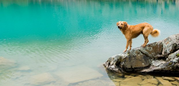 The ultimate guide to remote living along with your dog by @girlswanderlust #girlswanderlust #travel #remotetravel #remotetraveling #traveling #wanderlust #dogs #dog #doglover 2.jpeg