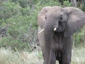 Girls Who Travel | A Wild Elephant