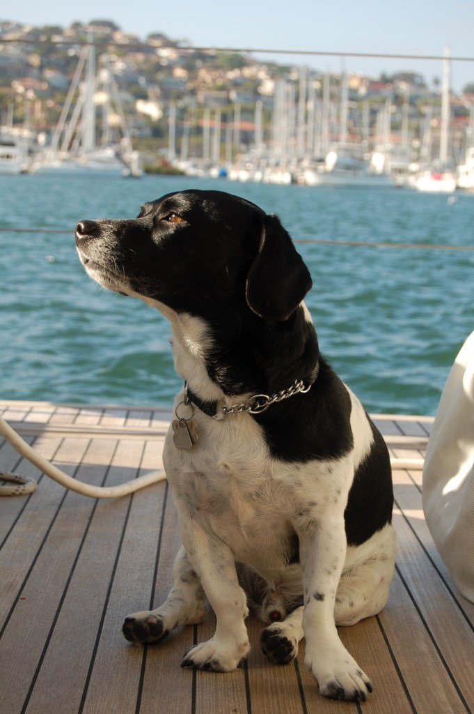 Girls Who Travel | Traveling with Pets: Baxter the 19 Country Dog