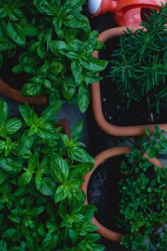 Girls Who Travel | Herbs