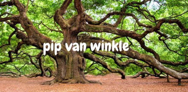 Pip Van Winkle