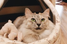 Girl, Unspotted -- Cat Cafe Neko No Niwa