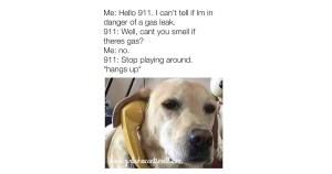 Anosmia and 911 Meme For Facebook