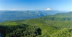 Great Oregon Hikes, Sherrard Point, Larch Mountain