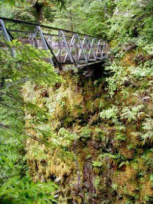 Eagle Creek to High Bridge Hike, Great Oregon Hikes