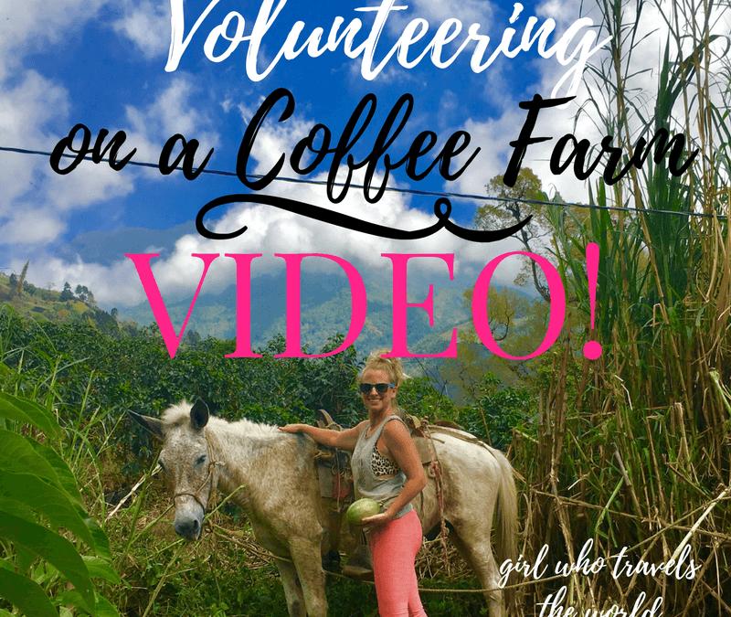 Volunteering on a Coffee Farm ~ Video!