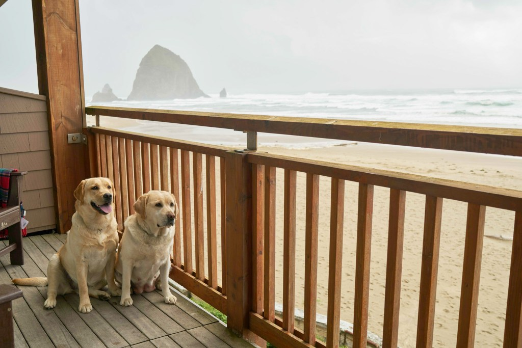 Best Pet-Friendly Hotels in Cannon Beach, Surfsand Resort