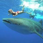 Ultimate Girl's Guide to Yucatan Travel, Girl WHo Travels the World, Whale Shark Holbox