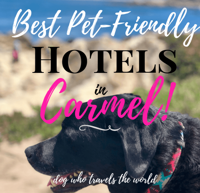Best Pet-Friendly Hotels in Carmel & Monterey, Girl Who Travels the World