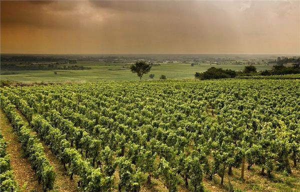 A Wine-Lover's Guide to Bordeaux Travel, Girl Who Travels the World