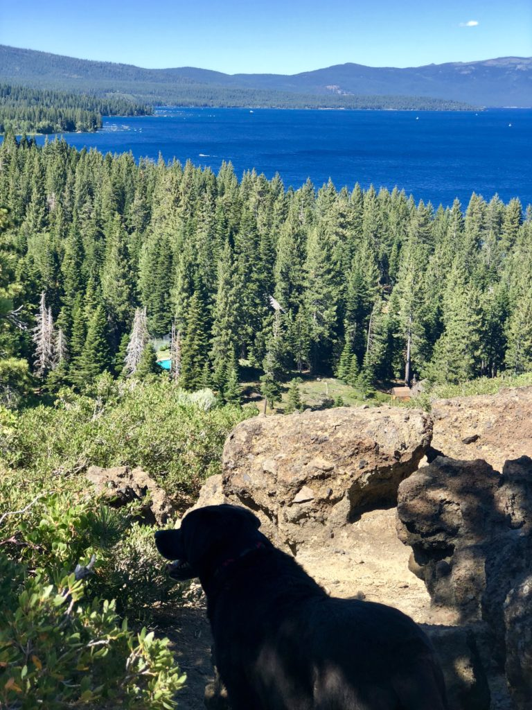 Best Hikes for Kids & Dogs at Lake Tahoe! Girl Who Travels the World