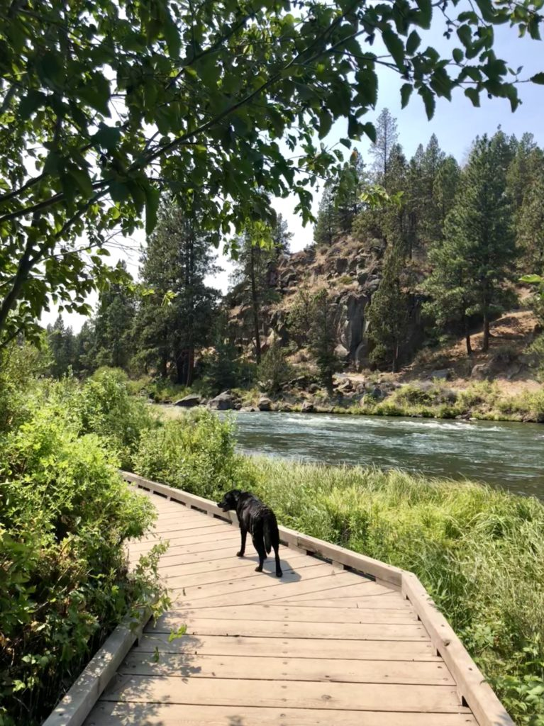 Best Off-Leash Dog Parks in Bend, Oregon, Girl Who Travels the World