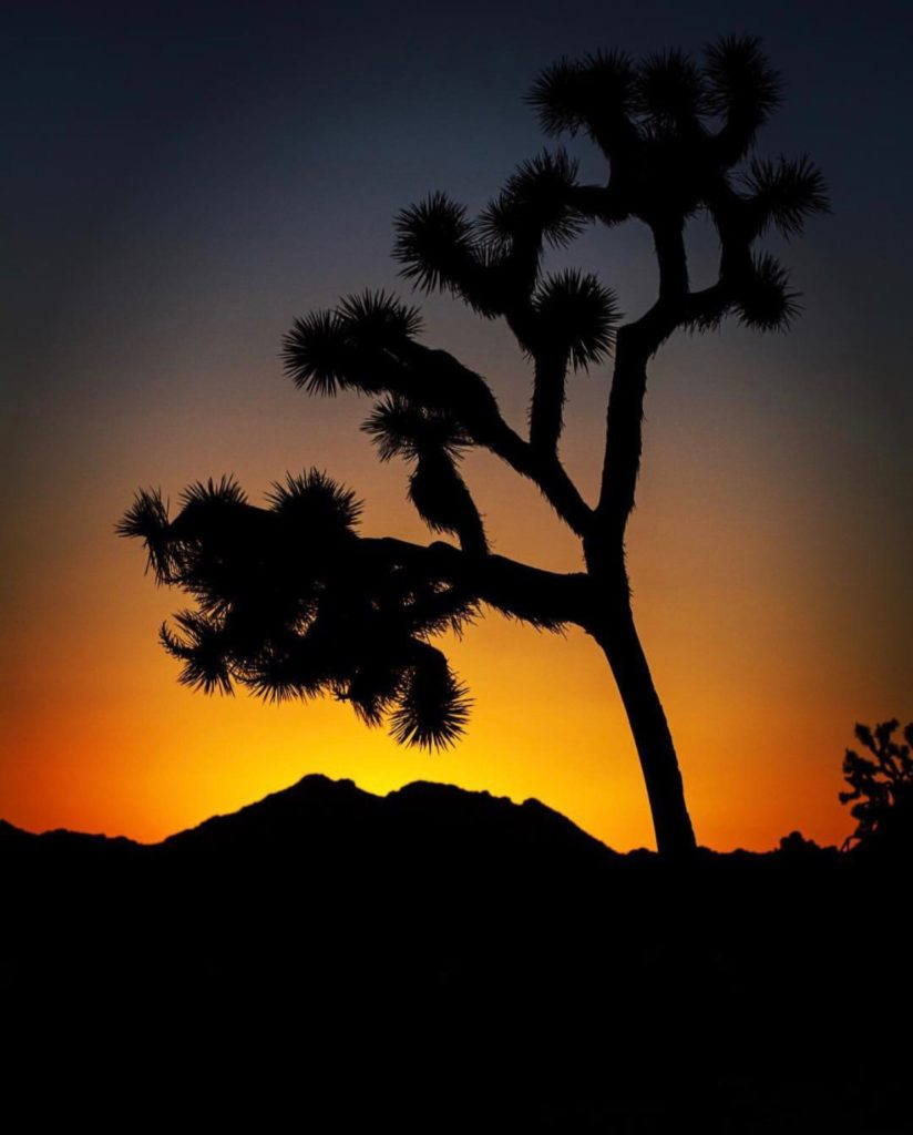 Girl's Road Trip to Joshua Tree, Girl Who Travels the World