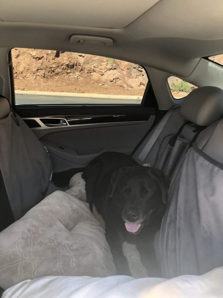 How to Road Trip with Your Dog in Style, Girl Who Travels the World