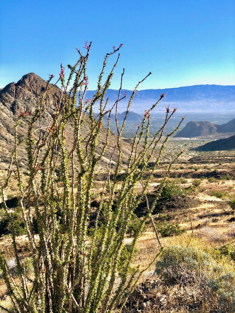 Top Five Day Hikes by Palm Springs, Girl Who Travels the World, Boo Hoff Trail