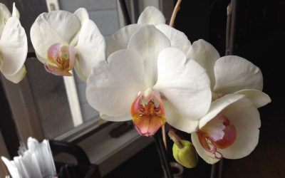 on the orchid that has been telling my story