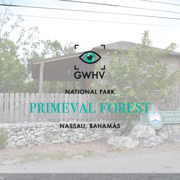 Primeval Forest National Park