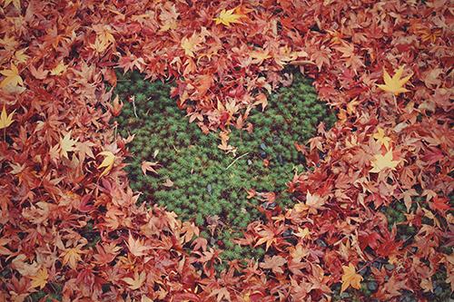 「ハート」「モミジ」「植物」「秋」「紅葉」「落ち葉」などがテーマのフリー写真画像