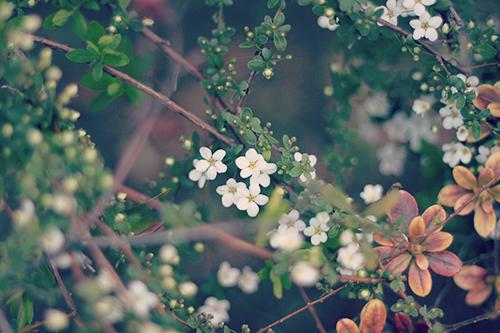 フリー写真素材:春に咲く可愛い小花