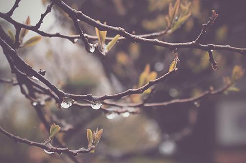 「しずく」「梅雨」「雨」などがテーマのフリー写真画像