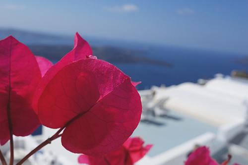 「夏」「植物」「花」などがテーマのフリー写真画像